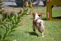 Banksia Park Puppies Tricky