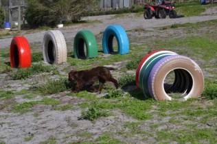 Banksia Park Puppies Walida - 17 of 26
