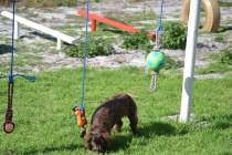 Banksia Park Puppies Walida - 24 of 26