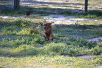 Banksia Park Puppies Wally - 1 of 13