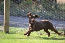 Banksia Park Puppies WoosterBanksia Park Puppies Wooster