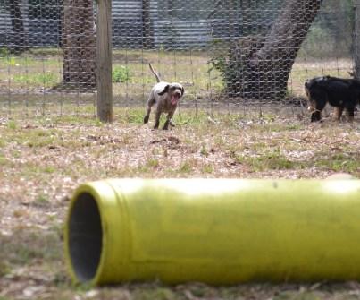 Banksia Park Puppies_Avis