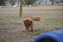 Banksia Park Puppies_Britz