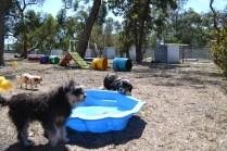 Banksia Park Puppies_Fin