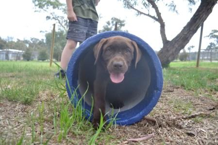 FB Banksia Park Puppies Meeka 15