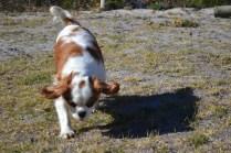 Oddball- Banksia Park Puppies - 16 of 33