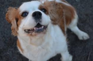 Oddball- Banksia Park Puppies - 32 of 33
