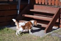 Oddball- Banksia Park Puppies - 5 of 33