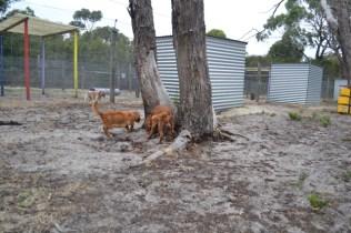 rosana-banksia-park-puppies-10-of-16