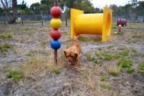 rosana-banksia-park-puppies-9-of-16