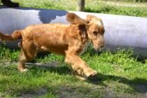 Banksia Park Puppies Wanetta