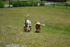 banksia-park-puppies-aino-5-of-23