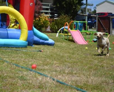 banksia-park-puppies-aino-7-of-23