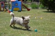 Banksia Park Puppies Fooseball - 27 of 28
