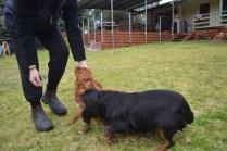 Banksia Park Puppies Hala - 31 of 31