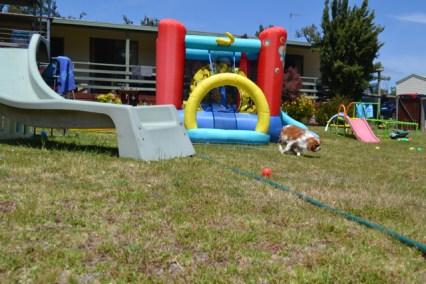 banksia-park-puppies-hera-7-of-16