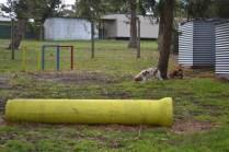 banksia-park-puppies-missy-11-of-40