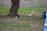 Banksia Park Puppies Panda