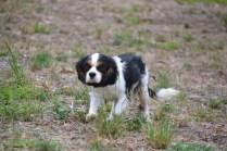 Banksia Park Puppies Petunia