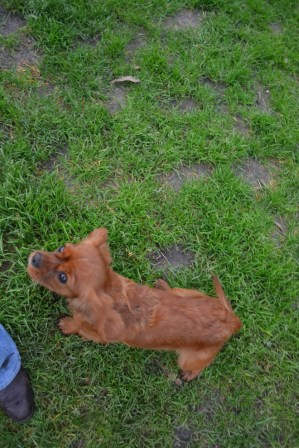 Banksia Park Puppies Sage - 11 of 14