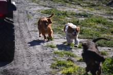 Banksia Park Puppies Willbee - 1 of 29