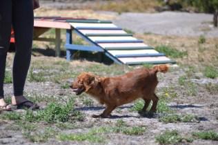 Banksia Park Puppies Willbee - 1 of 54 (14)