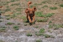 Banksia Park Puppies Willbee - 1 of 54 (20)