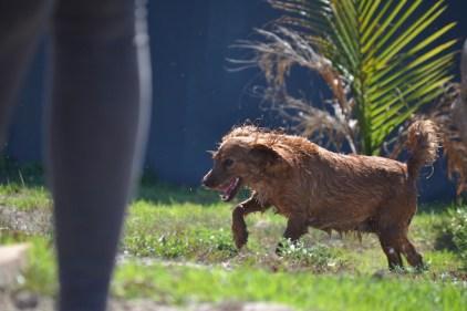 Banksia Park Puppies Willbee - 1 of 54 (21)