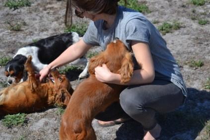 Banksia Park Puppies Willbee - 1 of 54 (32)