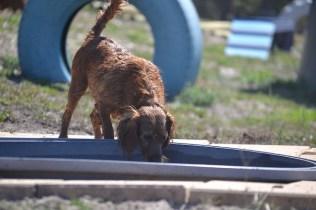 Banksia Park Puppies Willbee - 1 of 54 (47)
