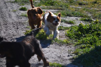 Banksia Park Puppies Willbee - 2 of 29