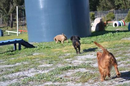 Banksia Park Puppies Willbee - 6 of 29