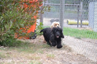 Banksia Park Puppies_Smooches