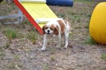 Banksia Park Puppies Harmony