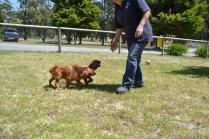 sage-banksia-park-puppies-7-of-13