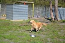 Banksia Park Puppies Elle 8