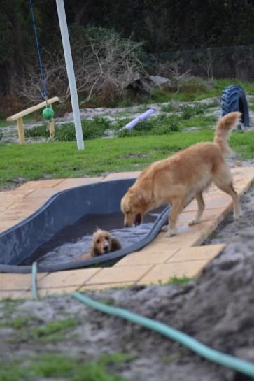 Banksia Park Puppies Sara - 31 of 39