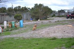 Banksia Park Puppies Sara - 5 of 39