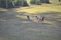 Banksia Park Puppies Avon Wendy Hekate