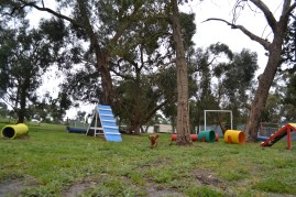 banksia-park-puppies-cosmo-19-of-22