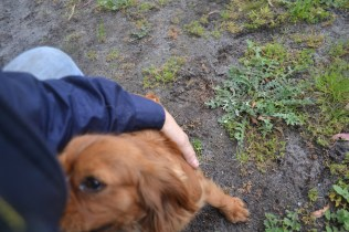 banksia-park-puppies-crunchie-13-of-25