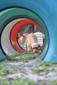 Banksia Park Puppies Cuzzle - 11 of 14