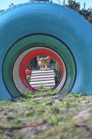 Banksia Park Puppies Cuzzle - 14 of 14
