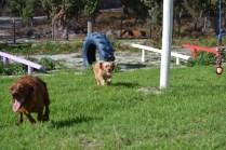 Banksia Park Puppies Cuzzle - 5 of 14