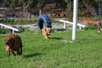 Banksia Park Puppies Cuzzle - 5 of 14