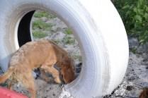 Banksia Park Puppies Cuzzle - 9 of 14