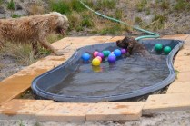 banksia-park-puppies-jacinta-wooster-ella-swoosh-36-of-51