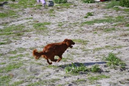 Banksia Park Puppies Poko - 5 of 19