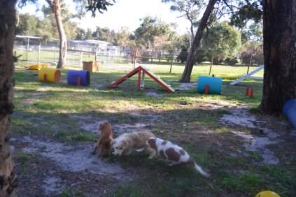 Banksia Park Puppies Ella