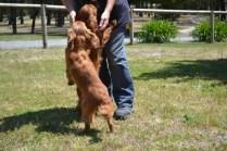 shazzoom-banksia-park-puppies-15-of-22